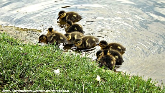 baby animals, pictures of baby animals, baby ducks, baby animal, cute baby animal